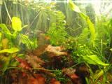 Рыбки, аквариумы Аквариумы и оборудование, цена 4000 Грн., Фото