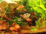 Рибки, акваріуми Акваріуми і устаткування, ціна 4000 Грн., Фото