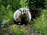 Тварини Екзотичні тварини, ціна 1000 Грн., Фото