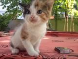 Кошки, котята Неизвестная порода, цена 100 Грн., Фото