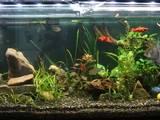 Рыбки, аквариумы Аквариумы и оборудование, цена 7000 Грн., Фото