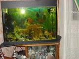 Рибки, акваріуми Акваріуми і устаткування, ціна 1300 Грн., Фото