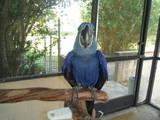 Попугаи и птицы Попугаи, цена 1000 Грн., Фото
