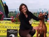 Собаки, щенята Заняття, тренування, ціна 1000 Грн., Фото