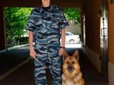Собаки, щенята Заняття, тренування, ціна 60 Грн., Фото
