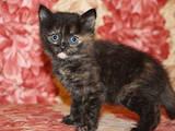 Кошки, котята Беспородная, цена 7 Грн., Фото