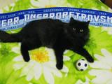 Кішки, кошенята Безпорідна, ціна 7 Грн., Фото