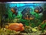 Рыбки, аквариумы Рыбки, цена 1500 Грн., Фото
