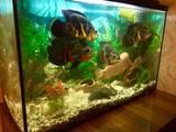 Рибки, акваріуми Рибки, ціна 1500 Грн., Фото