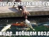 Рыбки, аквариумы Рыбки, цена 100 Грн., Фото