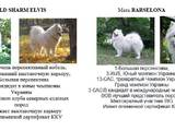 Собаки, щенки Самоед, цена 9000 Грн., Фото