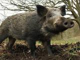 Животные Экзотические животные, цена 7000 Грн., Фото