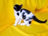 Кошки, котята Беспородная, Фото