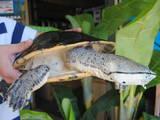 Тварини Екзотичні тварини, ціна 25000 Грн., Фото