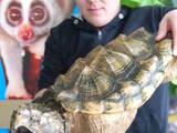 Животные Экзотические животные, цена 75000 Грн., Фото
