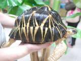 Животные Экзотические животные, цена 27500 Грн., Фото