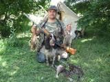Собаки, щенята Російський спаніель, ціна 2200 Грн., Фото