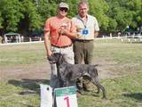 Собаки, щенята Німецька гладкошерста лягава, ціна 6500 Грн., Фото