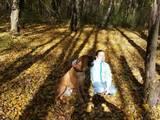 Собаки, щенята Бульмастиф, ціна 3000 Грн., Фото