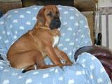 Собаки, щенки Неизвестная порода, цена 1000 Грн., Фото