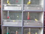 Папуги й птахи Клітки та аксесуари, Фото