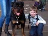 Собаки, щенки Ротвейлер, цена 6000 Грн., Фото