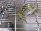 Попугаи и птицы Попугаи, Фото