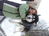 Собаки, щенки Аляскинский маламут, цена 5500 Грн., Фото