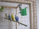Папуги й птахи Папуги, Фото