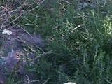 Дачі та городи Вінницька область, ціна 136000 Грн., Фото