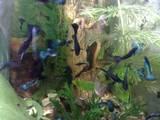 Рибки, акваріуми Рибки, ціна 8 Грн., Фото