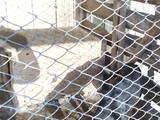Собаки, щенки Неизвестная порода, цена 1500 Грн., Фото