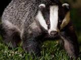 Животные Экзотические животные, цена 1500 Грн., Фото