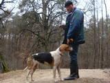 Собаки, щенята Російський хорт, ціна 5000 Грн., Фото
