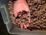 Собаки, щенята Корм, ціна 20 Грн., Фото