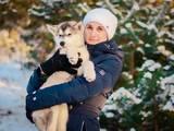 Собаки, щенки Аляскинский маламут, цена 7000 Грн., Фото