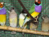 Попугаи и птицы Разное, цена 800 Грн., Фото