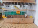 Попугаи и птицы Канарейки, цена 200 Грн., Фото