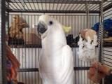 Папуги й птахи Папуги, ціна 10 Грн., Фото