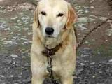 Собаки, щенки Разное, цена 2500 Грн., Фото