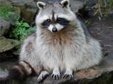 Тварини Екзотичні тварини, Фото