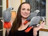 Папуги й птахи Папуги, ціна 3000 Грн., Фото
