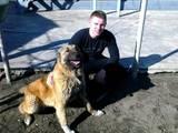 Собаки, щенки Кавказская овчарка, цена 2600 Грн., Фото