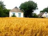 Дома, хозяйства Киевская область, цена 625000 Грн., Фото
