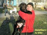 Собаки, щенки Лабрадор ретривер, цена 15000 Грн., Фото