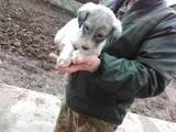Собаки, щенки Неизвестная порода, цена 5000 Грн., Фото