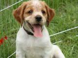 Собаки, щенята Невідома порода, ціна 300 Грн., Фото