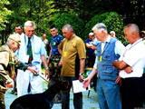 Собаки, щенки Немецкая жесткошерстная легавая, цена 8000 Грн., Фото