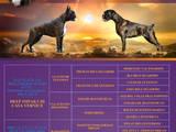 Собаки, щенята Боксер, ціна 25000 Грн., Фото
