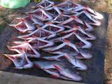 SS.ua: Рыбная компания реализует оптом речную вяленую, Цена 50 Грн./кг.. Архив объявлений - Объявления